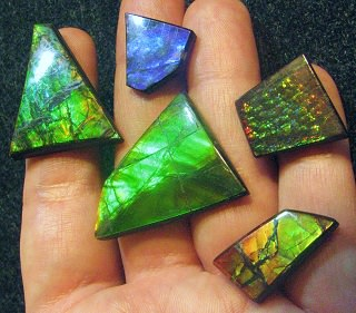 Ammolite: Ammonite Fossil Gemstone